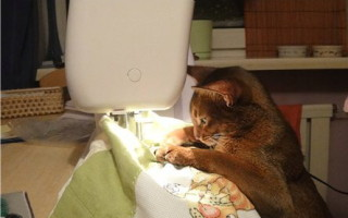 catsewing